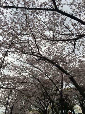 スタッフブログ掲載写真_2016.04.04_飯田 菜月